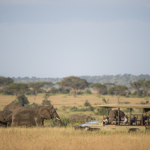 Singita Faru Faru Lodge Safari Game Drive