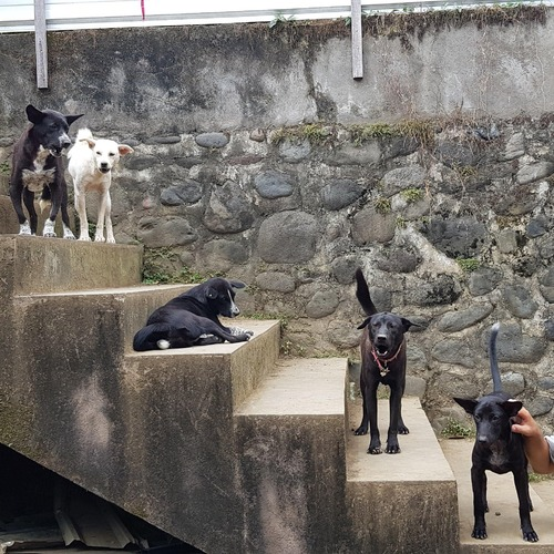 BAWA Dogs on staircase