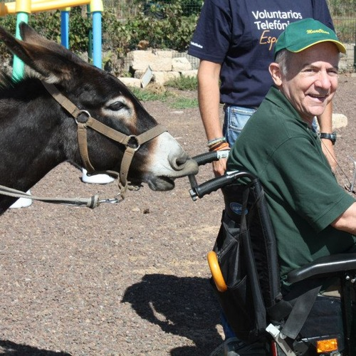 AMBAR Association - Donkey Therapy