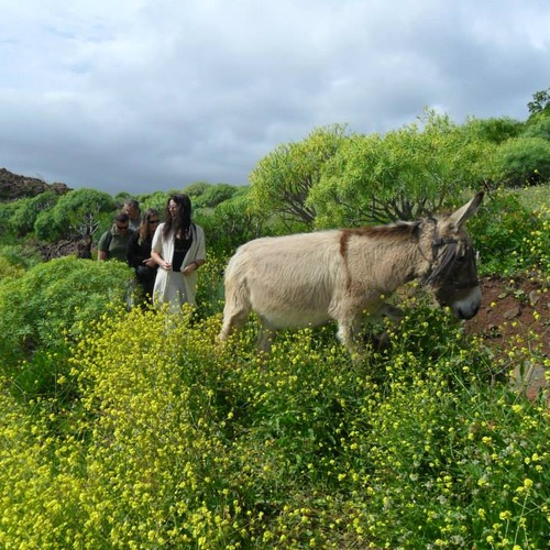 Donkey Walks at Macronesian EcoSuite Caves