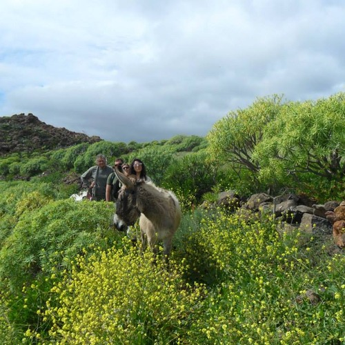 Donkey Walks at Macronesian EcoSuite Cave