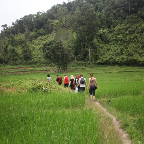 HillTribe Jungle Treks