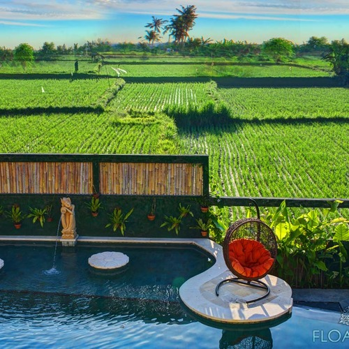 Rice Paddy Pool Views at Floating Leaf