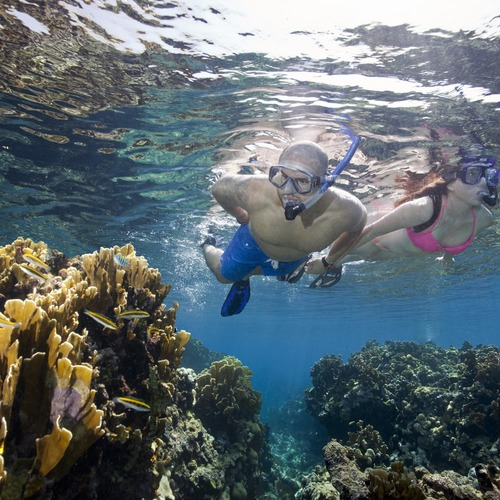 Hamanasi Adventure & Dive Resort Snorkelling