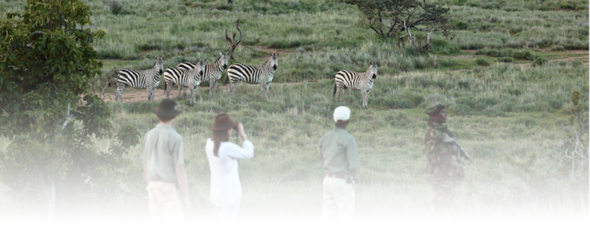 Borana Lodge Walking Safari Zebra