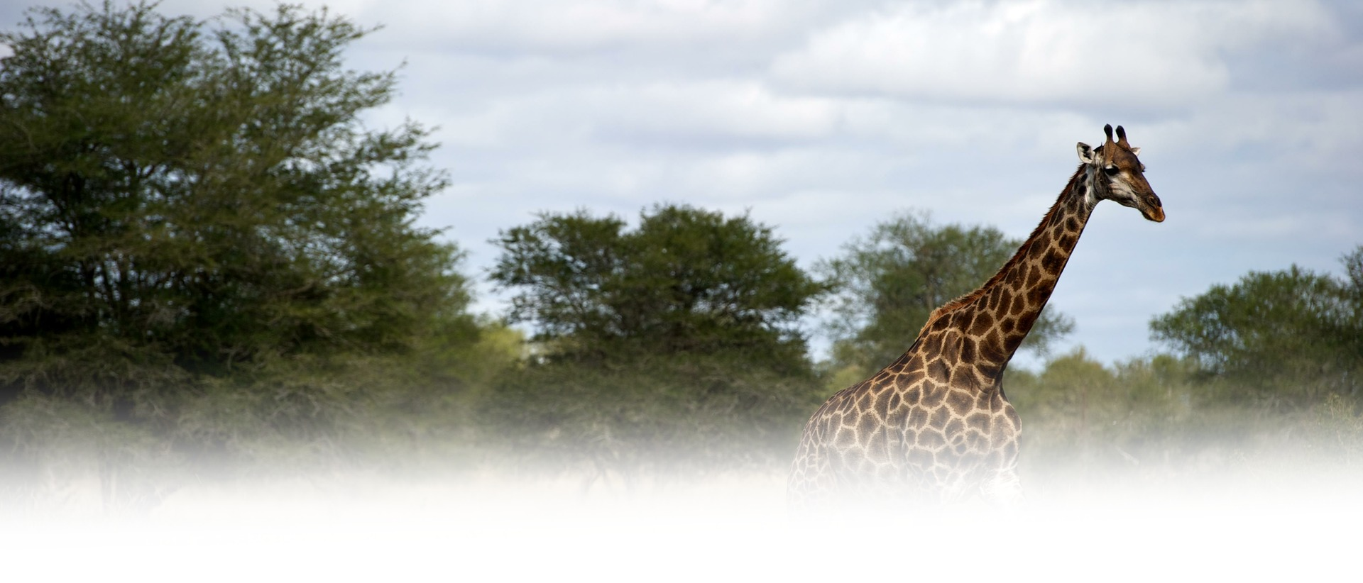 Singita Lebombo Lodge Giraffe